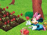 Цветы Микки