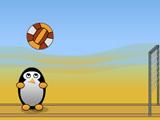 Пингвины играют в волейбол