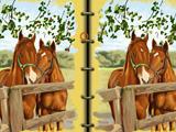 Книга искусства лошадей