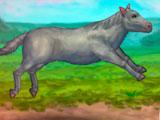 Моя смелая лошадь