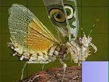 Слайды сладкой бабочки