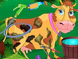 Уход за любимой коровой