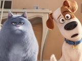Тест: Ты кошка или собака?