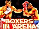 Боксеры на арене